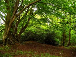 Bucklebury Common by parallel-pam