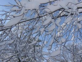 tree branches snow by CotyStock