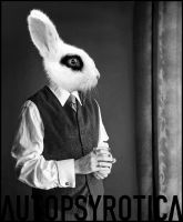 Leporidae by Autopsyrotica-Art