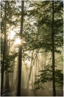 Sunlit Forest by ThisWomanWanders