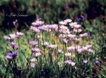 Fresh meadow. by Phototubby