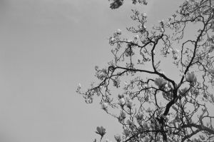 Film - LXXXV - blossom by Picture-Bandit