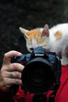 Kitty and Nikon by ErkanKalenderli