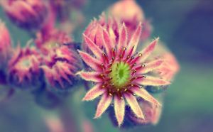 Floret by filth666