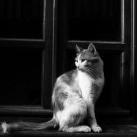 noble cat by hidlight