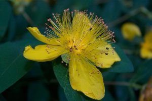 Flower 03 by mordoc-stock