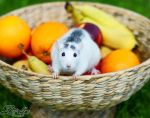 fruity rat by LueDscha
