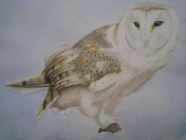 Barn Owl Watercolour by CousticHippy