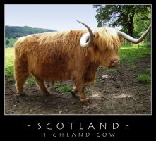 Scotland - Cow by dark-spider