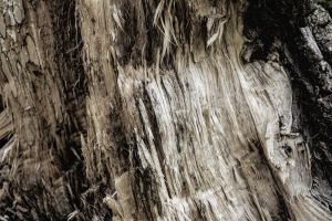 Wood Texture 06 by gatterwe