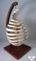 Gourd at Heart - Carved Ribcage by ART-fromthe-HEART