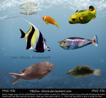 Indic Ocean Fishes III PNG by YBsilon-Stock