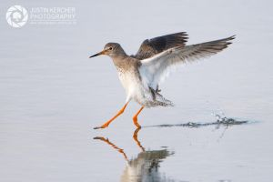 Redshank Landing by Neutron2K