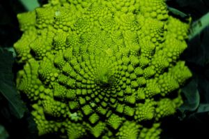 Fractal Vegetable by johnwaymont