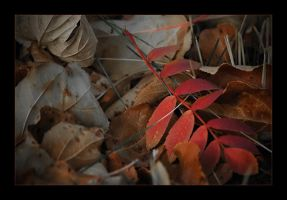 The Colors of Fall by whitelouis