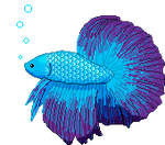 Betta Fish by stacy3601