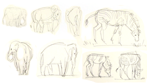 Zoo Sketches by Atlantistel