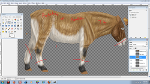 Asian Wild Horse WIP by patchesofheaven74