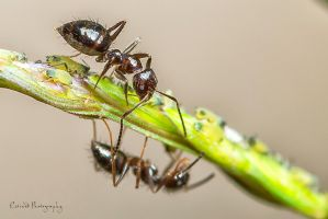 ~ Tiny Ants by Enticedphotos