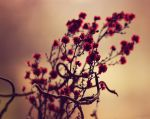 Winter Red by Peterix