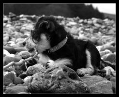 Rio in Black and White by Gilly71