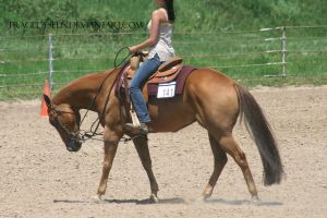 Quarter Horse Stock 104 by tragedyseen