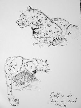 Life Drawing of Panthers by ClaireJouy