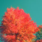 fall trees.. by sweet-reality-xo