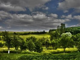 HDR Field by paully93