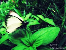 Butterfly. by kathyxsmile