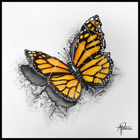 Paper Butterfly by pitschke