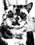 Greyscale cat by Ilovedragons1