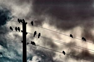 Birds by cahilus
