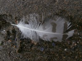 Small Feather in the Sand by Shyruban