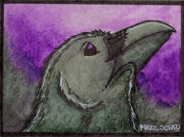 Crow in purple-ATC by TornFeathers