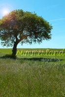 Summerland cover by twist-of-fate-16
