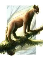 Mountain Lion by maggock