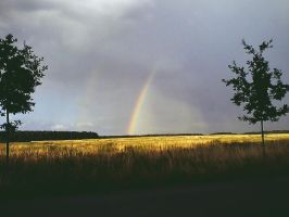 rainbow by poisen2014