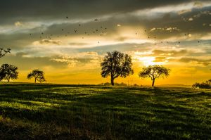 Sunset with birds by Maxens