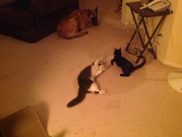 My dog and cats .u. by M0ssie
