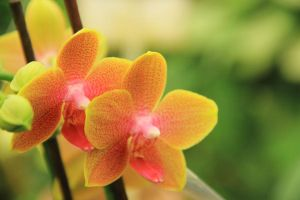 Orchids 2 by yasminstock