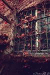Autumnal window by PrincessInTheShit