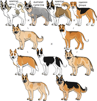 4-Way Mixed Breeds Random, 10 by Leonca