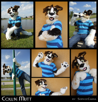 Fursuit - Collie Mutt by sophiecabra