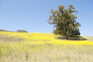 Yellow Fields by Tithos