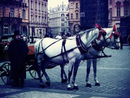 Prague horses by nectar666