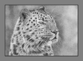 Framed Leopard by Shelleymags