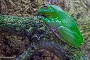 12-07 green frog by evionn