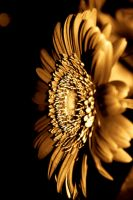 Gold Flower of Hope by jessmerlo