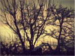 Winter sunset. by Ofemid